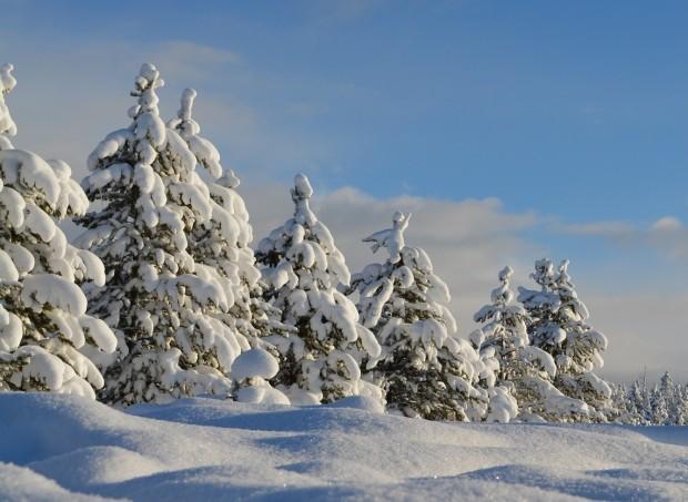 snow 1209991 1920 bb 620x453 Ausstellung Winterwald