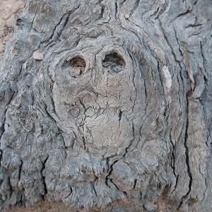 tree 591588 e1544089716861 Botanische Exkursionen rund um Zierenberg: Dornröschenschlaf der Bäume im Winter