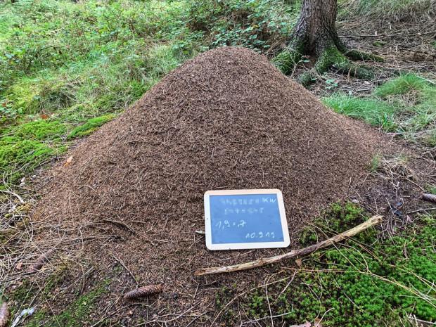 3 Kahlrückige Waldameise c Markus Raum Geodaten verpixelt 620x465 Fortsetzung des Waldameisenprojekts des Naturpark Hirschwald