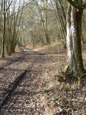 Am_Jakobsweg__c_Naturpark_Hirschwald