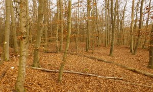 Hügelgrab (c) LS Baier