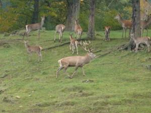 Hirsch_Heinzhof__c__Naturpark_HIrschwald