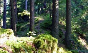 Hirschwald (c) Naturpark Hirschwald