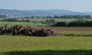 Köferinger Heide (c) NP Hirschwald