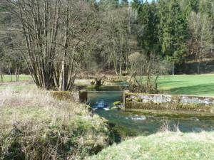 Lauterach__c__Naturpark_Hirschwald
