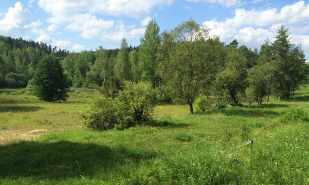 NSG Pfistertal c Naturpark Hirschwald 620x372 Perlen im Naturschutzgebiet Pfistertal bei Vilshofen