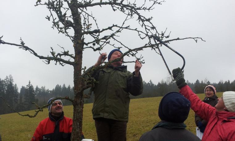 Saftwaage Und Leittrieb Obstbaume Richtig Schneiden Naturpark
