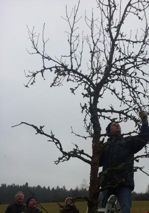 Obstbaumschnitt__c__Christian_Rudolf