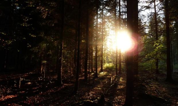 Sonnenstrahl Wald 620x371 Märchenwanderung durch den Hirschwald
