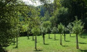 Streuobstwiese Hohenkemnath (c) Naturpark Hirschwald