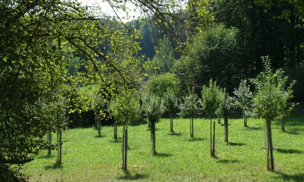 Streuobstwiese Hohenkemnath c Naturpark Hirschwald 620x372 Fotowettbewerb Öko Modellregion: Streuobst