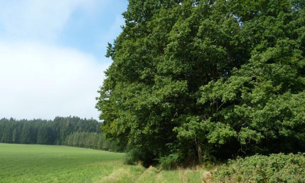 Waldrand 620x372 Das Klima ändert sich   der Wald auch