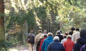 Wanderer im Wald (c) Naturpark Hirschwald
