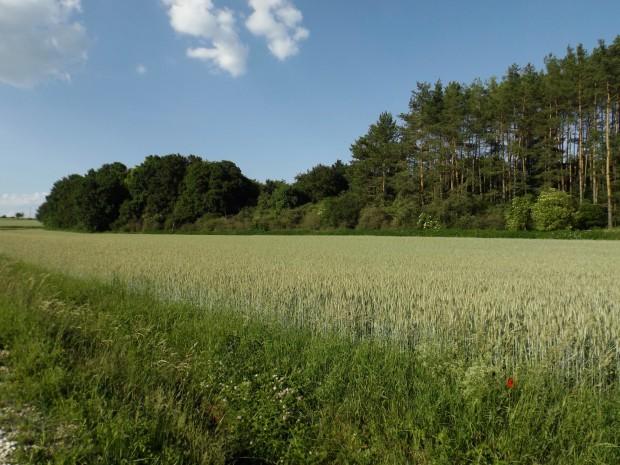 Wanderung Winbuch c Lorna Simone Baier 620x465 SA, 06.10. Wanderung: Der Klang des Ahornblatts