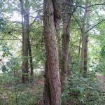 baeume_klein-150x150__c__Kloster_Ensdorf