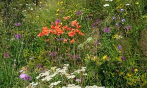 Blühende Kräuter im Naturpark Hirschwald