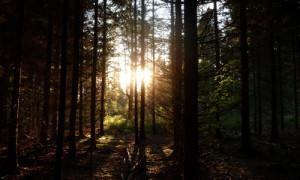 Sonnenstrahl im Wald (c) Naturpark Hirschwald Gruber 2012 Herbstwald