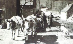 Heimkehr vom Feld (c) Peter Hammer Ensdorf