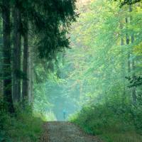 Jogger im Tiergarten-Stefan Bröker-1