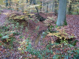 P1010249 Bachlauf im Tiergarten -1