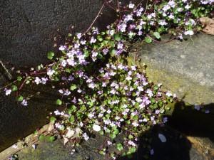 Stufen mit Pflanze-1 Foto B-Kraß