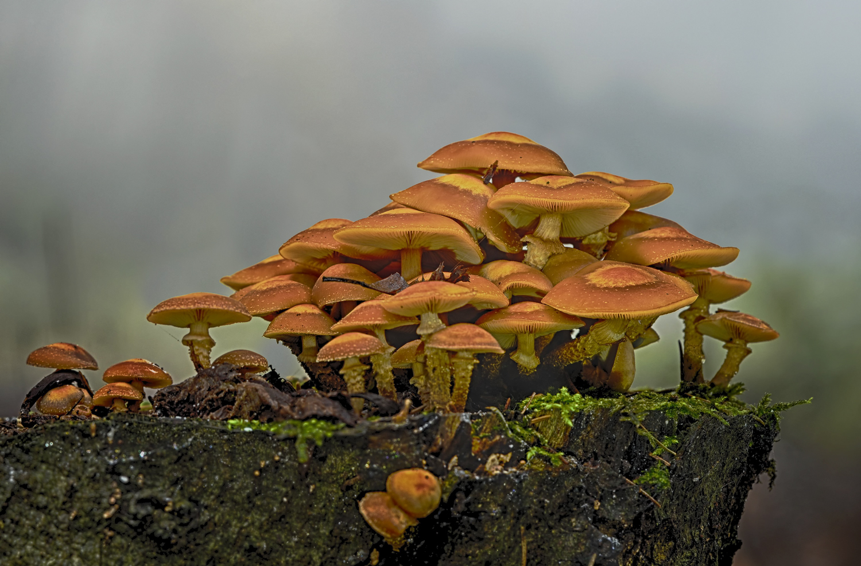 """4496 kopiek """"Herbstzeit ist Pilzzeit"""""""