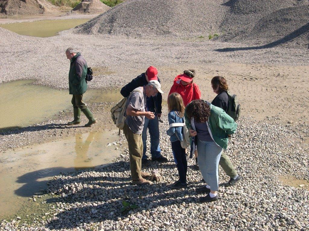 Fossilien sammeln Foto NHS Kiesgrubenschätze   Fossilien sammeln bei Malente