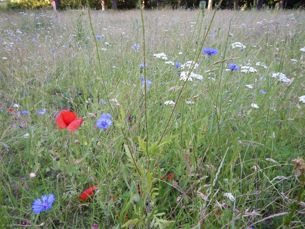Foto M Wenzel NPHS1 Es blüht im Naturpark Holsteinische Schweiz!