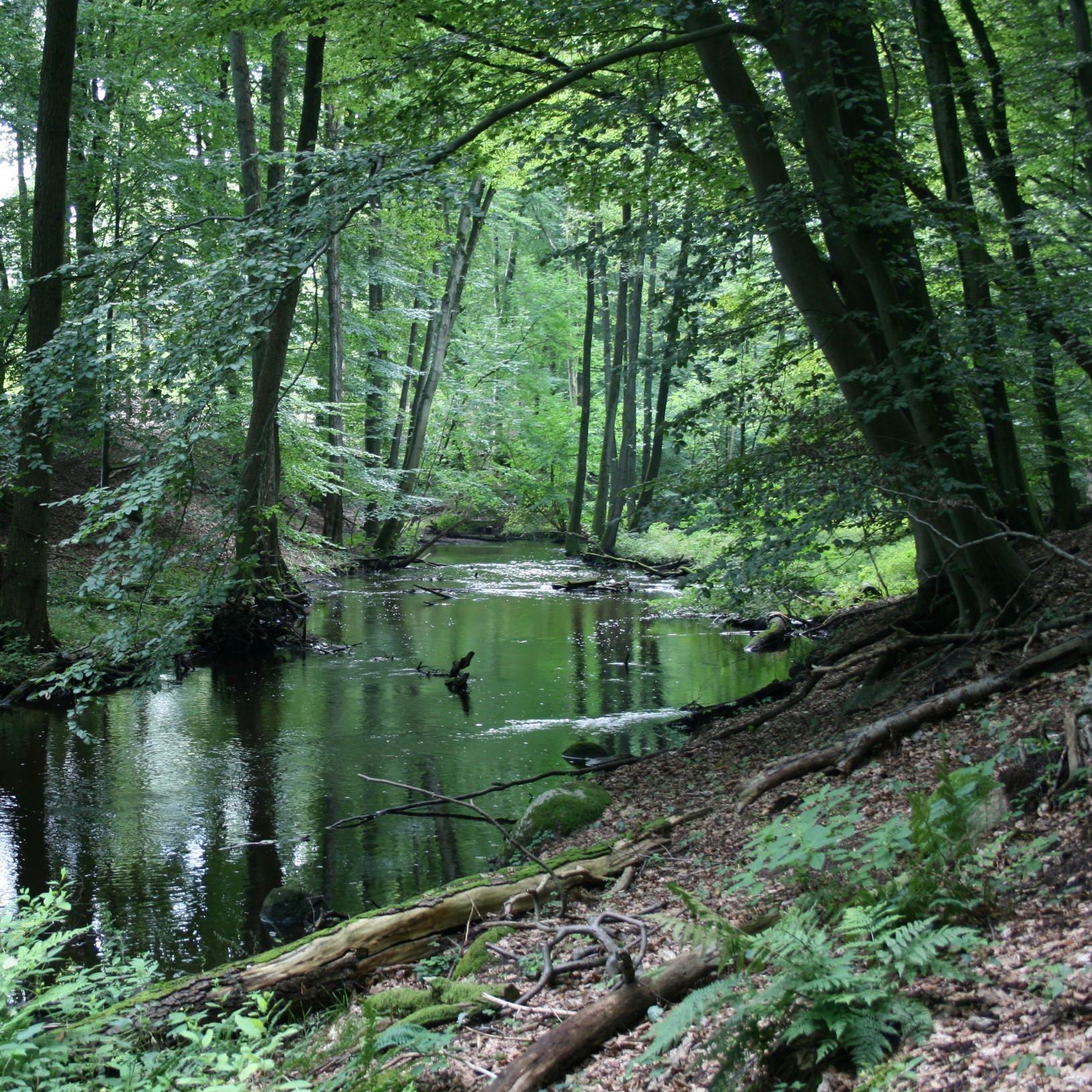 Foto NPHS3 Die Rückkehr des Lachsbaches   vom Graben zum naturnahen Fließgewässer