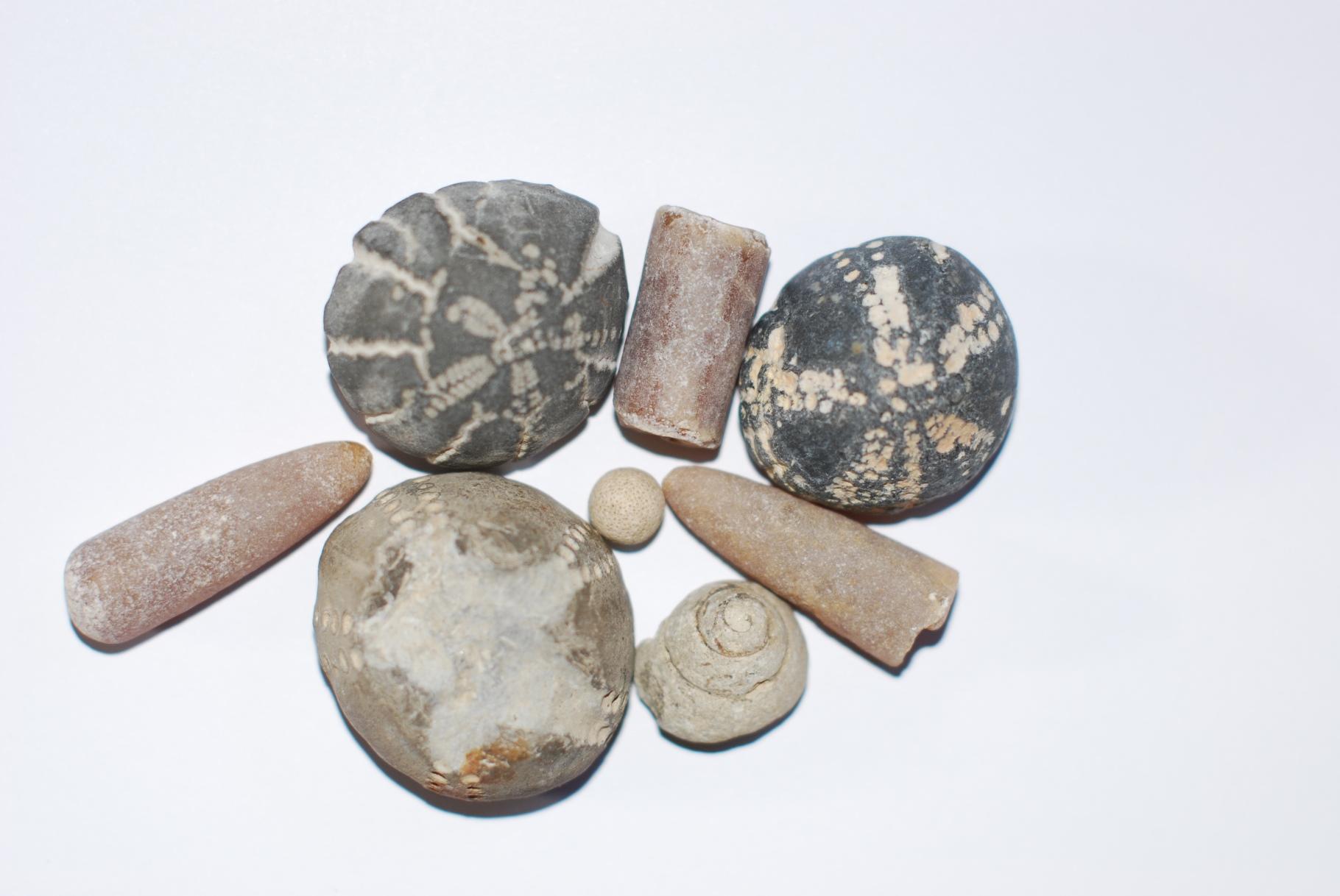 Foto Sonja Fuhrmann Kiesgrubenschätze! – Fossilien sammeln