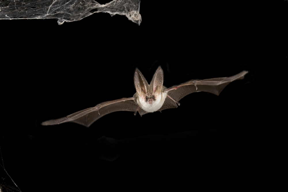 "Foto VDN Eike Mross Nacht.Geflüster: ""Fledermäuse – Jäger der Nacht"""
