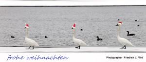 Foto VDN Friedrich J Flint 300x129 Niklasabend bei den Schellenten
