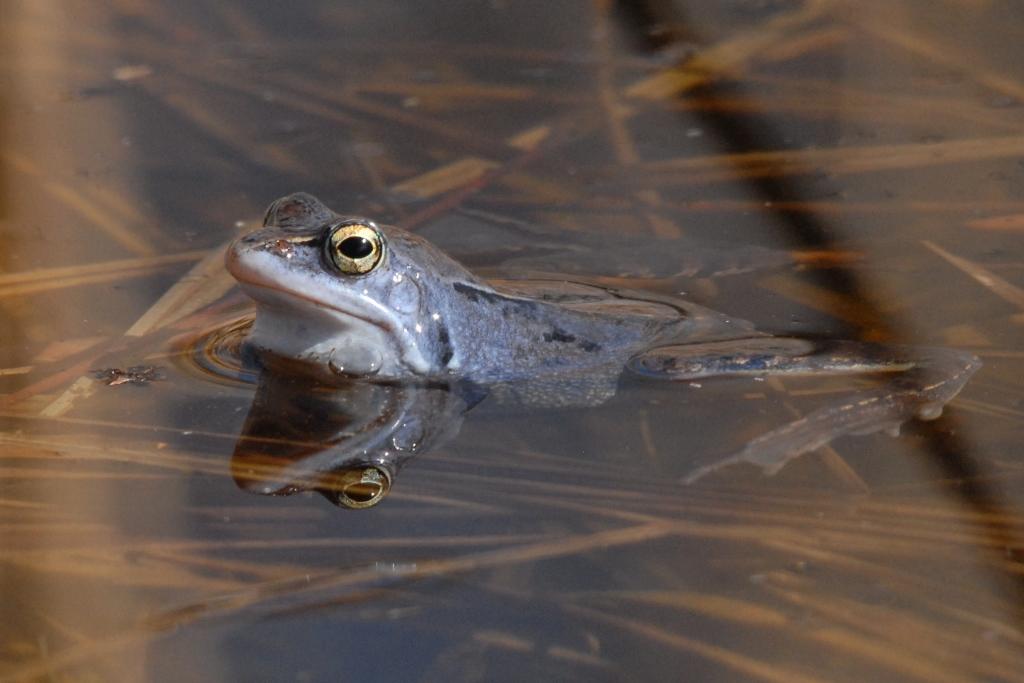 Foto VDN Siegfried A Walter Ausstellung: Bunte Welt der Amphibien