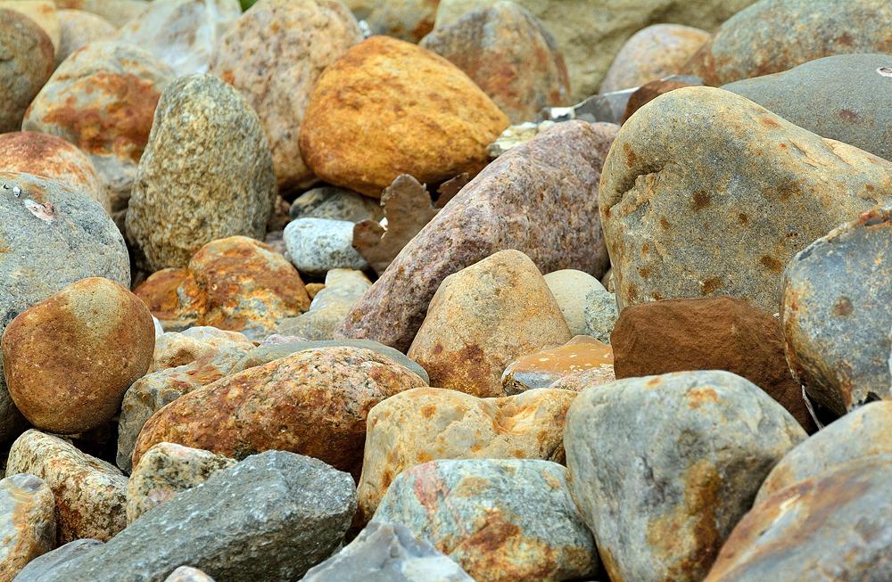 Foto VDN siggi Fossilien sammeln