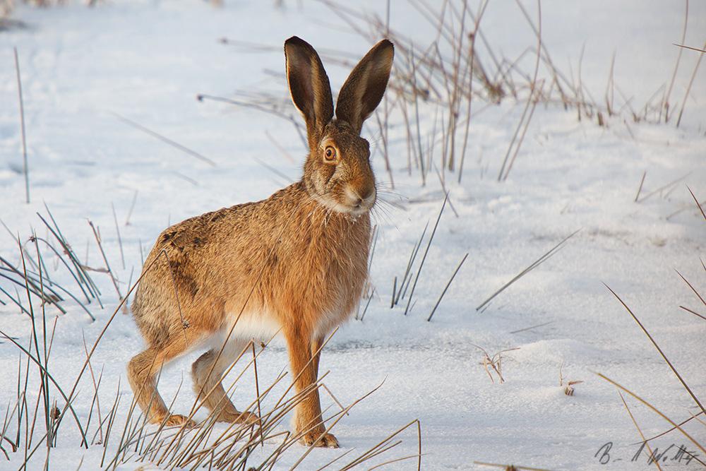 """Hasi Foto VDN Bernd Wolter Drei Kreativnachmittage zum Thema """"Tiere im Winter"""""""
