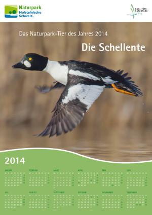 Kalenderposter 2014 Schellente