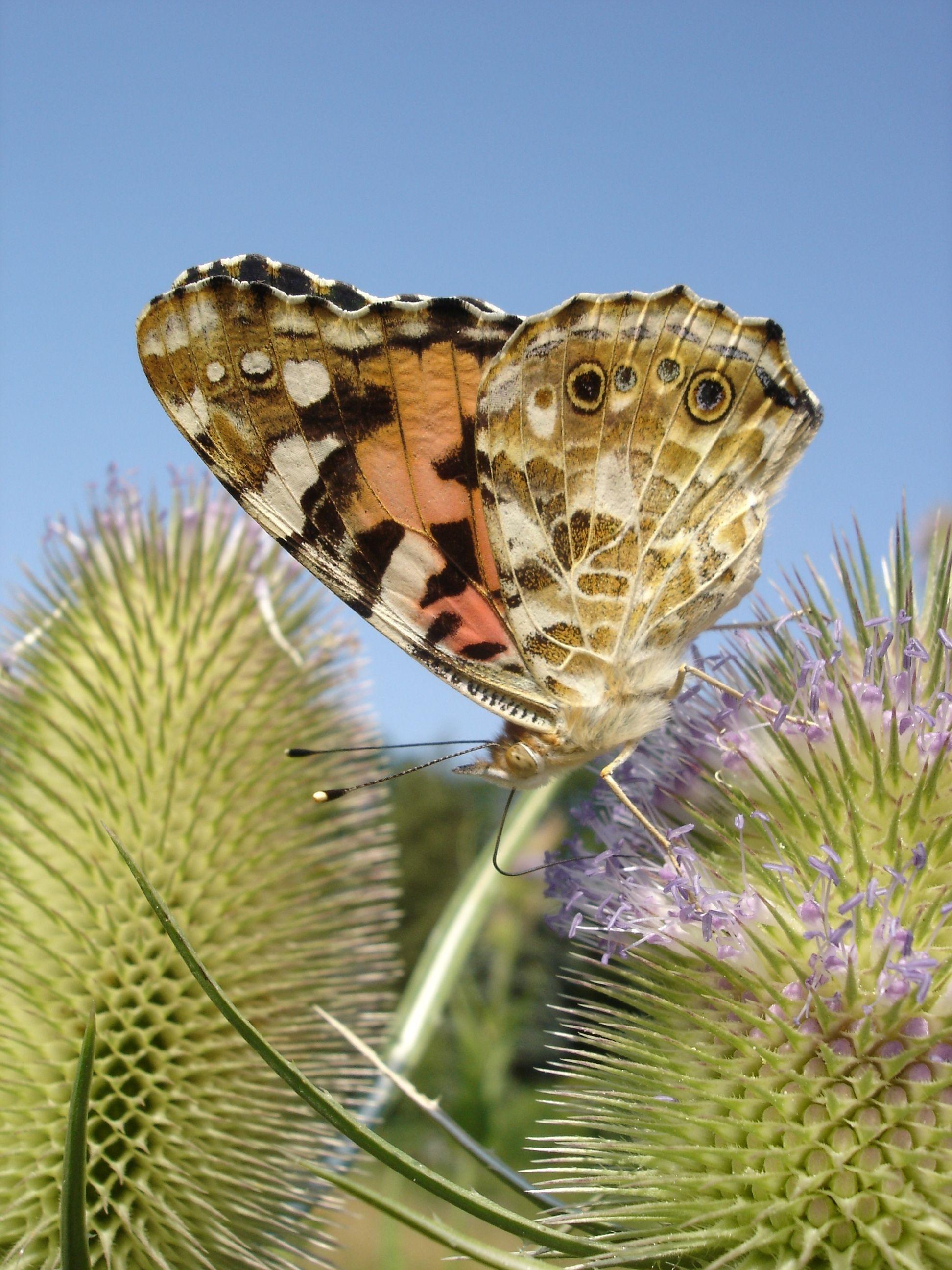 NPHS Ein Garten voller Leben – Schmetterlinge und Weiden in Bad Segeberg