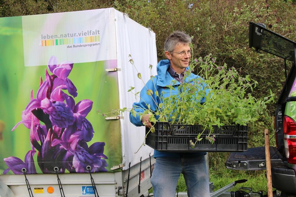 Projektleiter Christian Dolnik Neues Zuhause für Heide Nelke und Thymian
