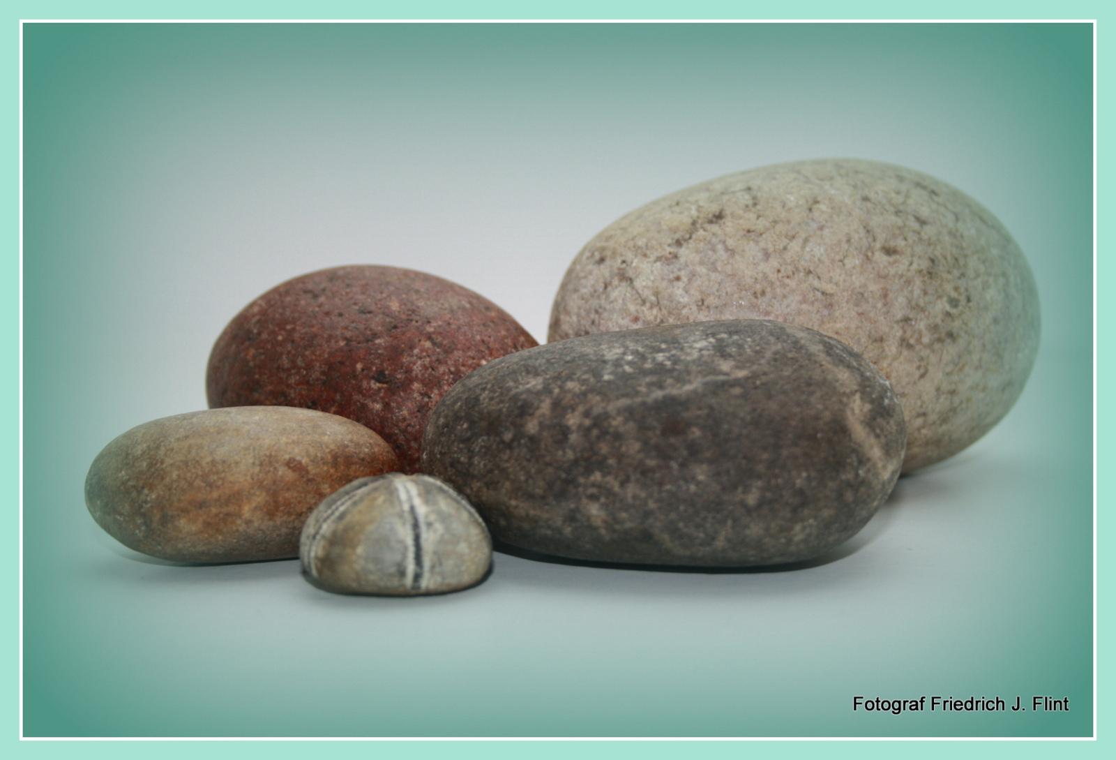 VDN Friedrich J Flint Fossilien sammeln