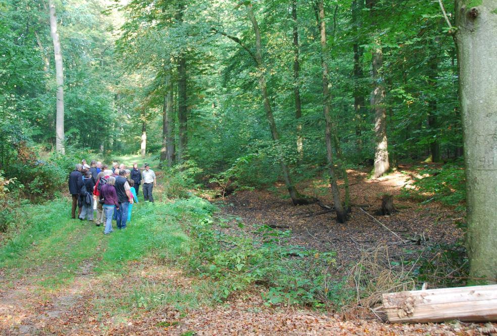 Waldspaziergang Holzeinschlag kontra Naturschutz?