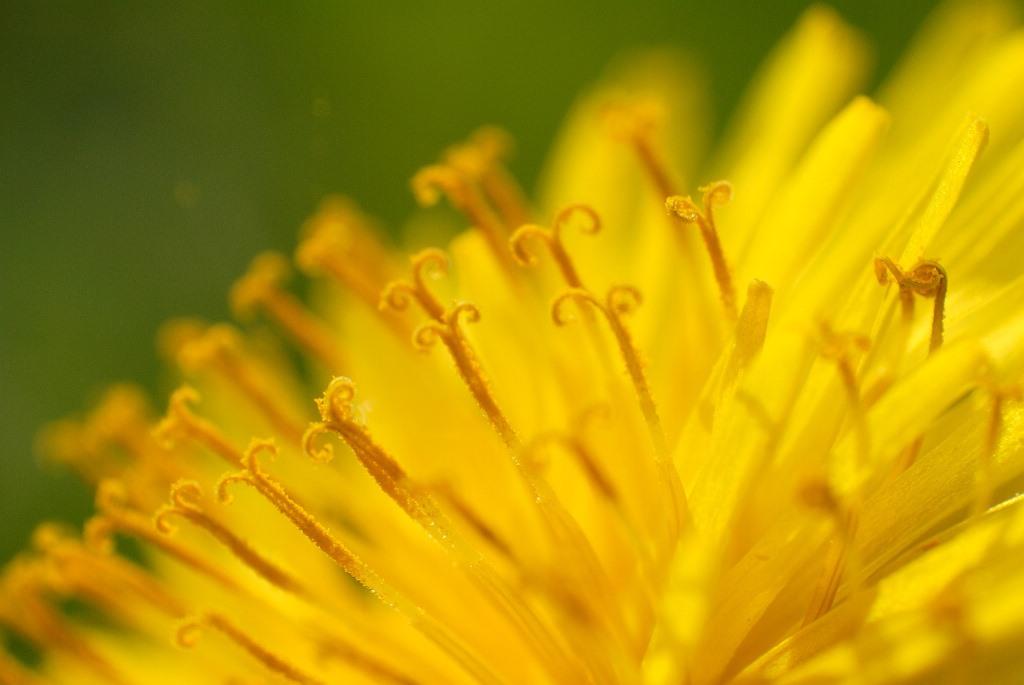 Wibikus Pixabay Vielseitige Wildkräuter im Frühling