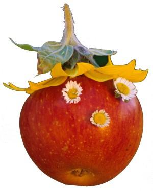 Apfel_Freigestellt_klein