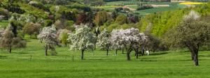 Frühling © VDN-Fotoportal Willi Fuchs