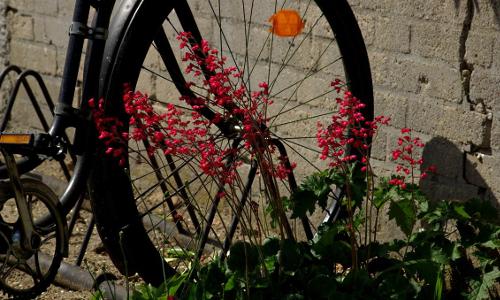 ohne worte beitrag Radwanderung um das Naturschutzgebiet Wockninsee