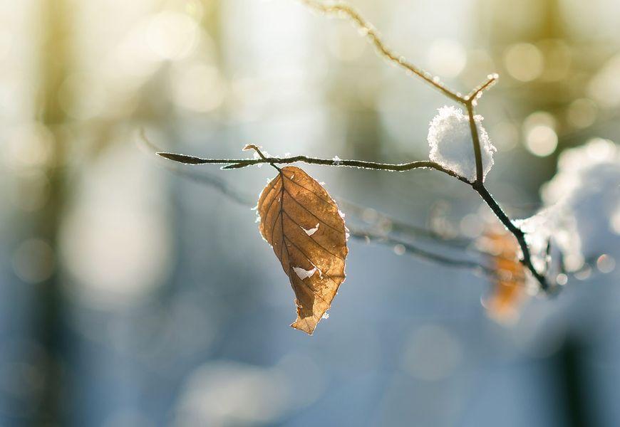 Winter Blatt Nicht nur im Winter Wärme in den Knochen