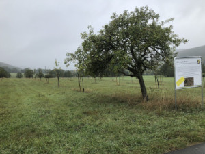 c Eschenburg Obstbaumpate 300x225 Ernte gegen Pflege: Eschenburg sucht Obstbaumpaten