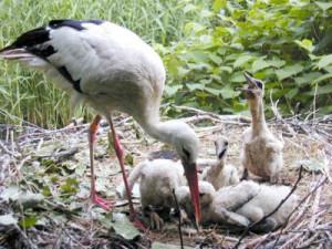 c Herborn Vogelpark 300x225 Familien Tag im Vogel  und Naturschutztierpark Herborn