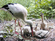 (c) Herborn Vogelpark_k