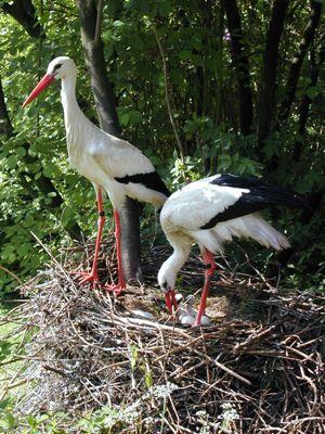 c Herborn Vogelpark Familientag im Vogel  und Naturschutzpark Herborn