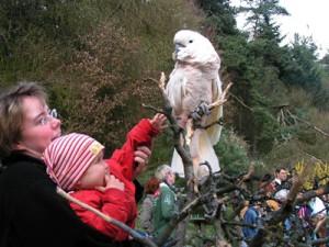 c Vogelpark Herborn Coco 300x225 Tiere zum Anfassen und  Blick hinter die Kulissen